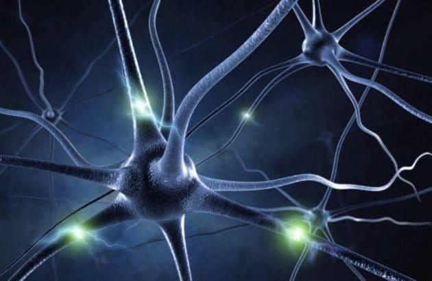 proyecto-blue-brain-el-cerebro-artificial-1-630x472